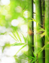 Bamboo boke Royalty Free Stock Photo