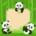 Bamboo border and fanny pandas cartoon frame three little illustration Stock Image