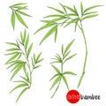 Bamboo branch. Stock vector illustration botanic flowers.