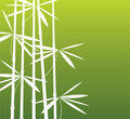 Bamboo branches Royalty Free Stock Photo