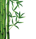 Bamboo branches illustration of on white background Stock Photos