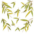 Bamboo branches isolated on white background vector illustration Royalty Free Stock Images