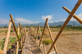 Bamboo bridge and field at nan province thailand Royalty Free Stock Image