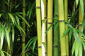 Bamboo close up Royalty Free Stock Photo