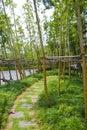 Bamboo feilds, China Royalty Free Stock Photo