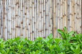 Bamboo fence background of in japanese style Stock Photography
