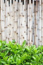 Bamboo fence background of in japanese style Stock Image