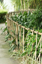 Bamboo fence and green plant Stock Photos