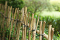 Bamboo fence and green plant Stock Photo