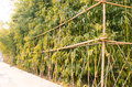 Bamboo fence growth in the small roadside garden,in china is a symbol of a gentleman,so often in the garden decorated with Stock Photography