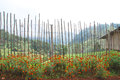 Bamboo fence and marigold with mountain background Royalty Free Stock Photo