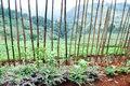 Bamboo fence with strabery farm background Royalty Free Stock Image