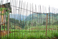 Bamboo fence with strabery farm background Royalty Free Stock Photography
