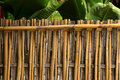 Bamboo fence texture natural background Royalty Free Stock Photo