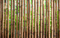 Bamboo fence a wood background Royalty Free Stock Photos