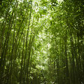 Bamboo forest. Stock Photo