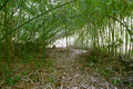 The bamboo forest Royalty Free Stock Photography