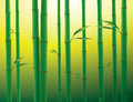 Bamboo forest background with green Stock Images