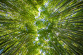 Bamboo forest beautiful at arashiyama touristy district kyoto Royalty Free Stock Photos