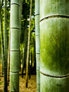 Bamboo forest detail at the fushimi inari shrine in kyoto japan Stock Photo