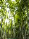 Bamboo forest at the fushimi inari shrine in kyoto japan Royalty Free Stock Photo