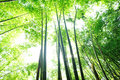 Bamboo forest green in china Royalty Free Stock Images