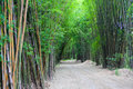 Bamboo forest green hall in thailand Stock Photo