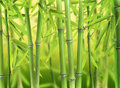 Bamboo forest green young sprouts Royalty Free Stock Image