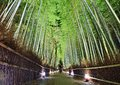Bamboo forest the of kyoto japan Royalty Free Stock Images