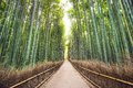 Bamboo forest of kyoto japan Royalty Free Stock Images