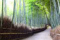 Bamboo forest in kyoto japan for adv or others purpose use Stock Photos