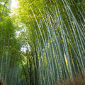 Bamboo forest in kyoto japan arashiyama Royalty Free Stock Photo