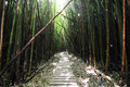 Bamboo Forest Maui, Hawaii Stock Photography