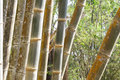Green bamboo tree forest