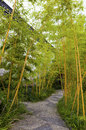 Bamboo forest trail path through Stock Images