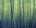 Bamboo Forest Trees Nature Con...