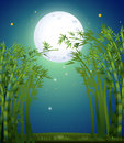 A bamboo forest under the bright fullmoon illustration of Stock Image