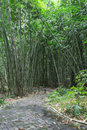 Bamboo Forest Walkway Royalty Free Stock Photo