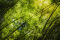 Bamboo Forests Are Rocking Mot...