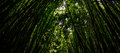 Bamboo forrest Royalty Free Stock Photo
