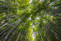Bamboo forrest and the traditional floks Royalty Free Stock Photo