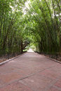 Bamboo garden Royalty Free Stock Photos