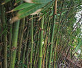 Bamboo garden and blurred leaves by wind motion Stock Photos