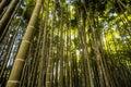 Asian bamboo garden