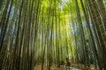 Bamboo Garden in Kamakura Japan