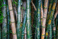 Bamboo Graffiti Royalty Free Stock Photo