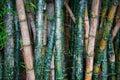 Bamboo Graffiti Royalty Free Stock Photo