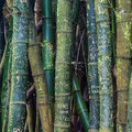 Bamboo grafitti on the island of oahu hawaii Stock Photos