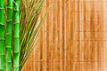 Bamboo and Grass Grunge Background Stock Photos