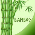 Bamboo on green background Royalty Free Stock Image